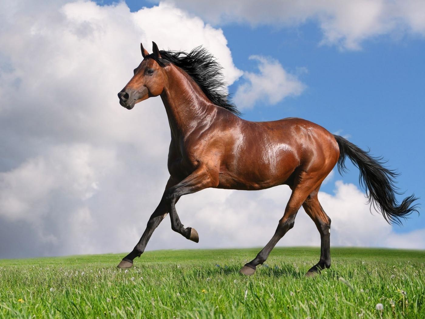 47890 скачать обои Животные, Лошади - заставки и картинки бесплатно