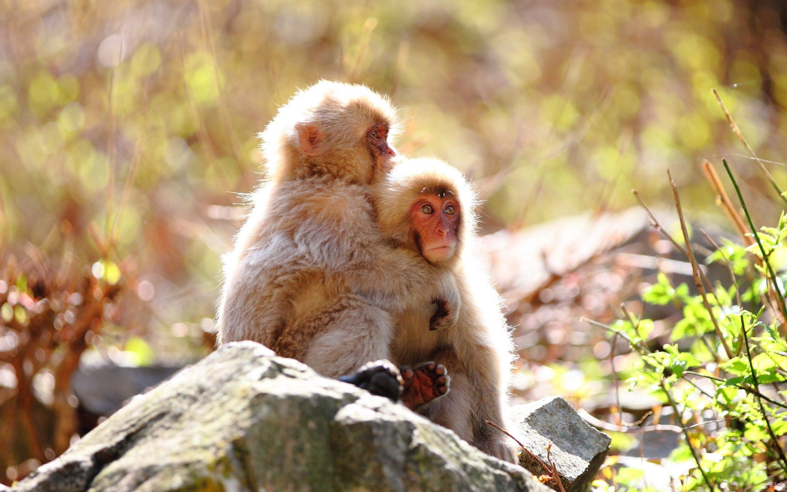 57312 Screensavers and Wallpapers Monkeys for phone. Download Animals, Monkeys, Rock, Couple, Pair, Stone, Care, Tenderness pictures for free