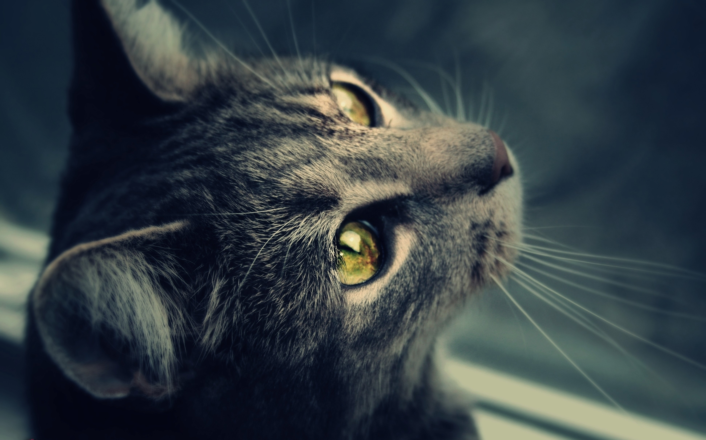 124839 download wallpaper Animals, Cat, Wool, Eyes, Sight, Opinion screensavers and pictures for free
