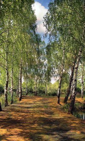 125552 скачать обои Природа, Лето, Пруд, Парк, Берёзы, Пейзаж - заставки и картинки бесплатно