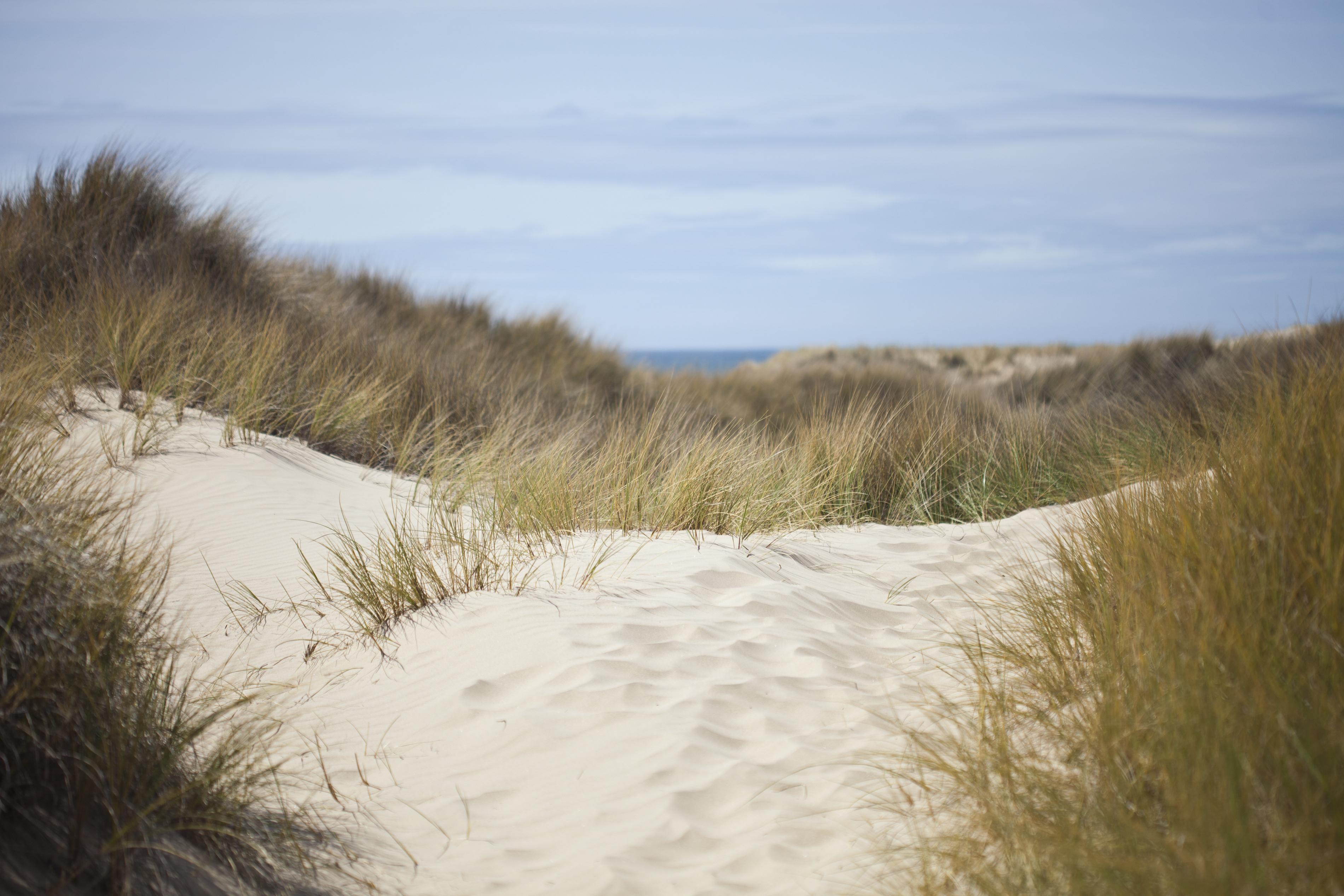 17271 скачать обои Пейзаж, Трава, Море, Песок - заставки и картинки бесплатно
