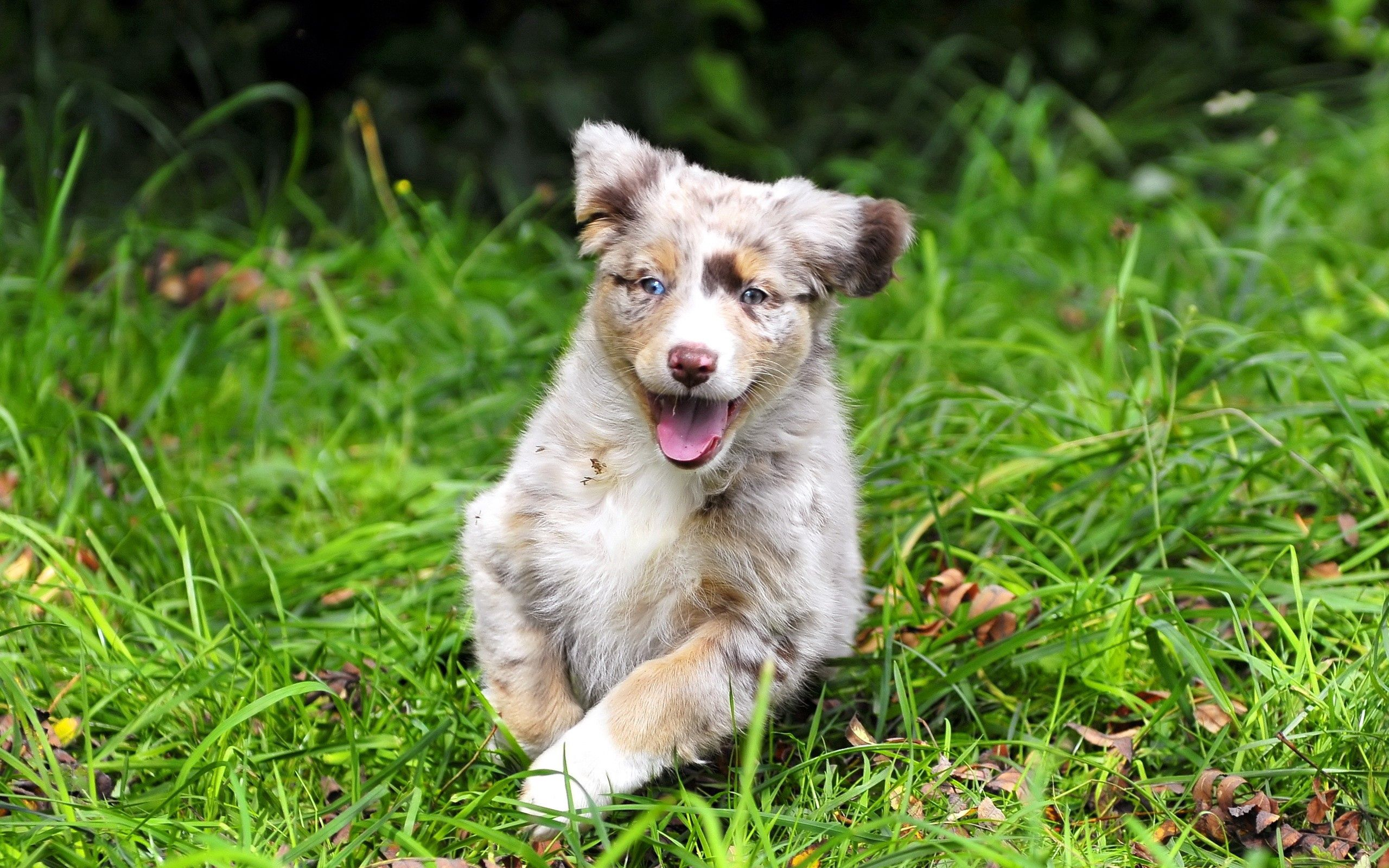 134394 download wallpaper Animals, Puppy, Spotted, Spotty, Run Away, Run, Emotions screensavers and pictures for free