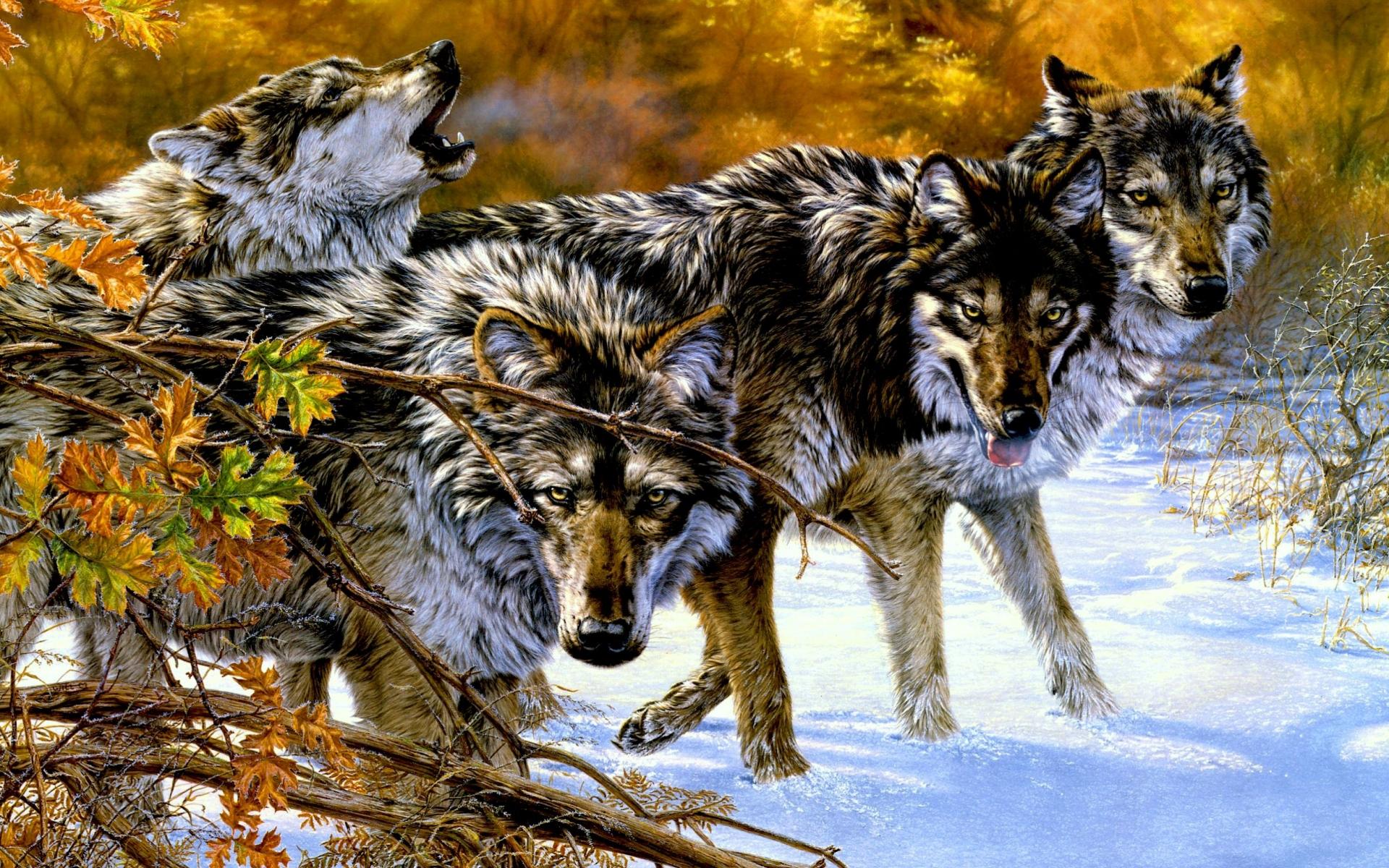 37011 завантажити шпалери Вовки, Тварини - заставки і картинки безкоштовно