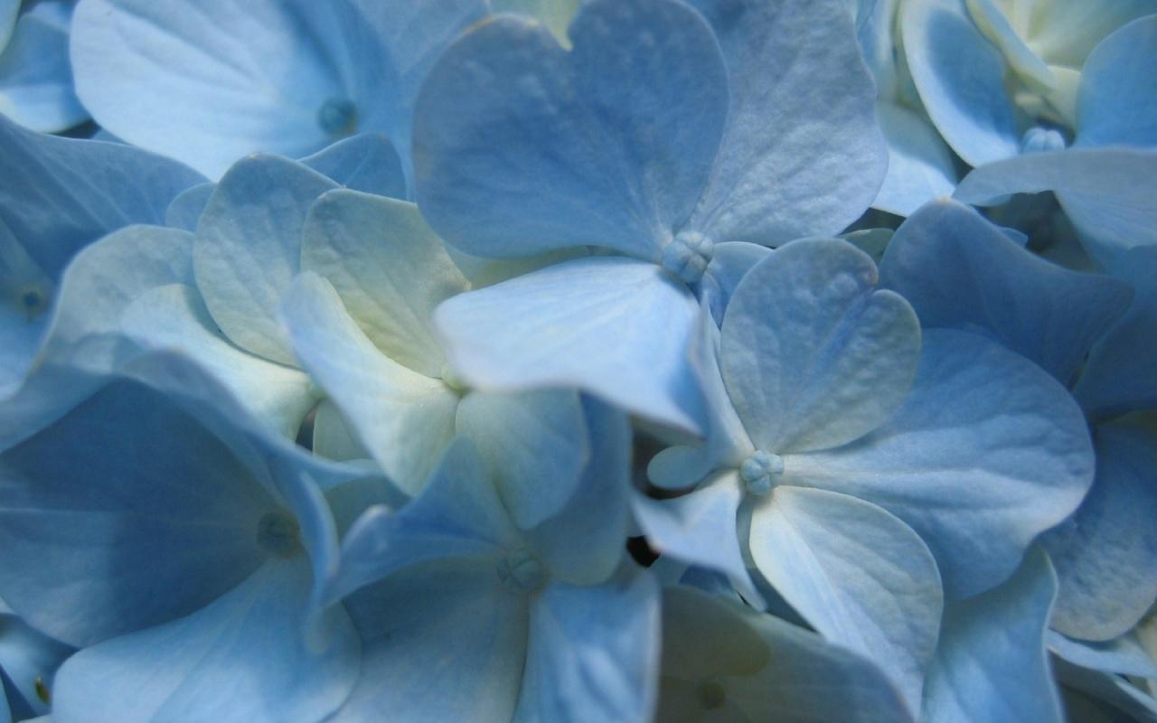 10022 descargar fondo de pantalla Plantas, Flores, Fondo: protectores de pantalla e imágenes gratis