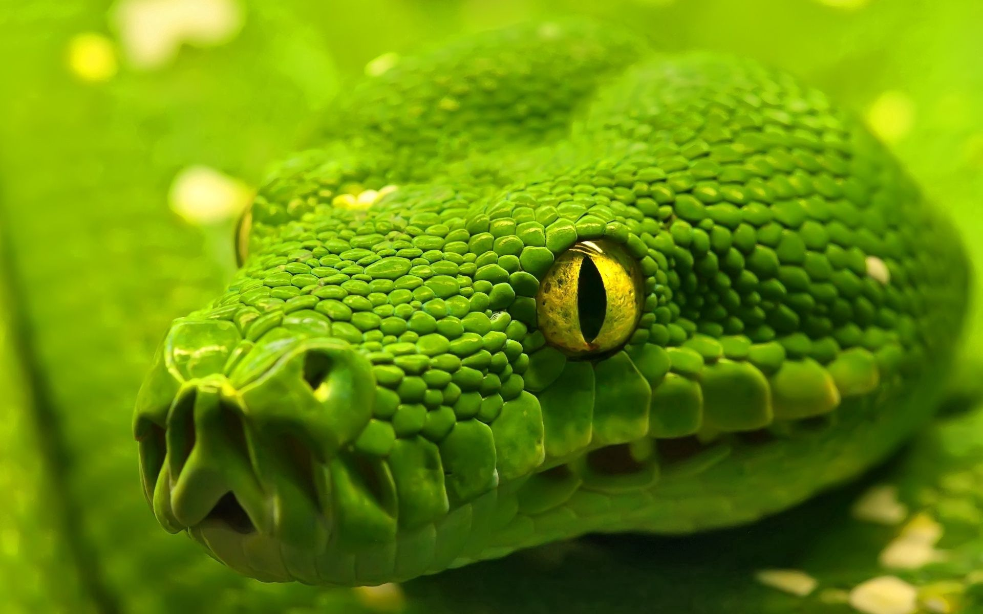 56398 Screensavers and Wallpapers Snake for phone. Download Eyes, Animals, Color, Snake, Head pictures for free