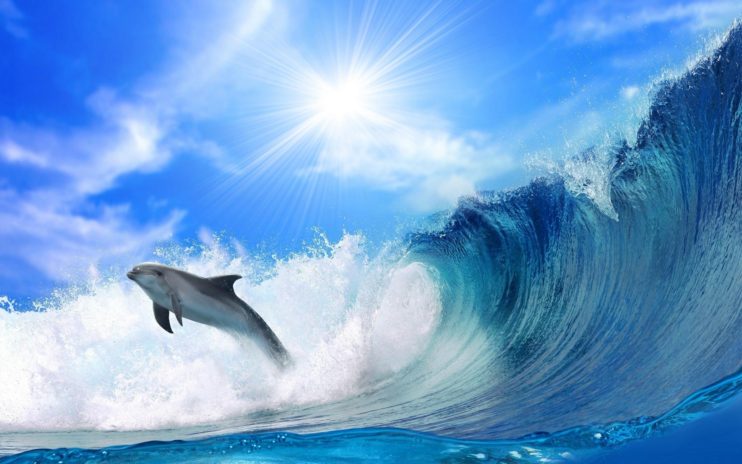 44475 Hintergrundbild herunterladen Tiere, Landschaft, Delfine, Sea - Bildschirmschoner und Bilder kostenlos