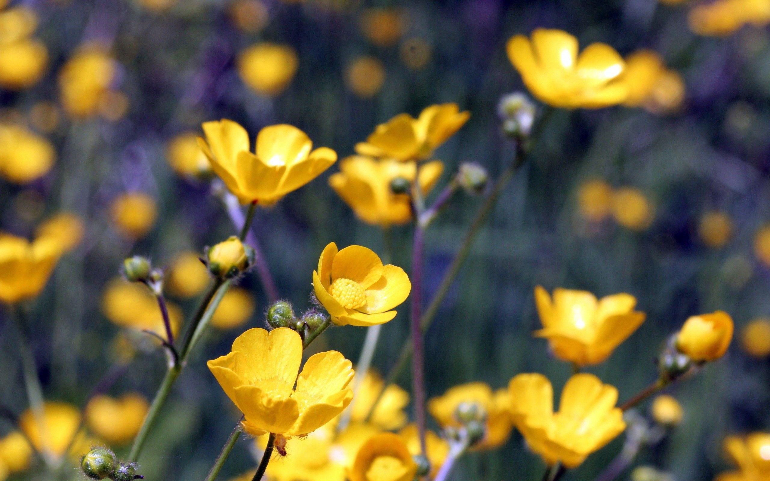 141402 скачать обои Желтый, Цветы, Макро, Полевой - заставки и картинки бесплатно