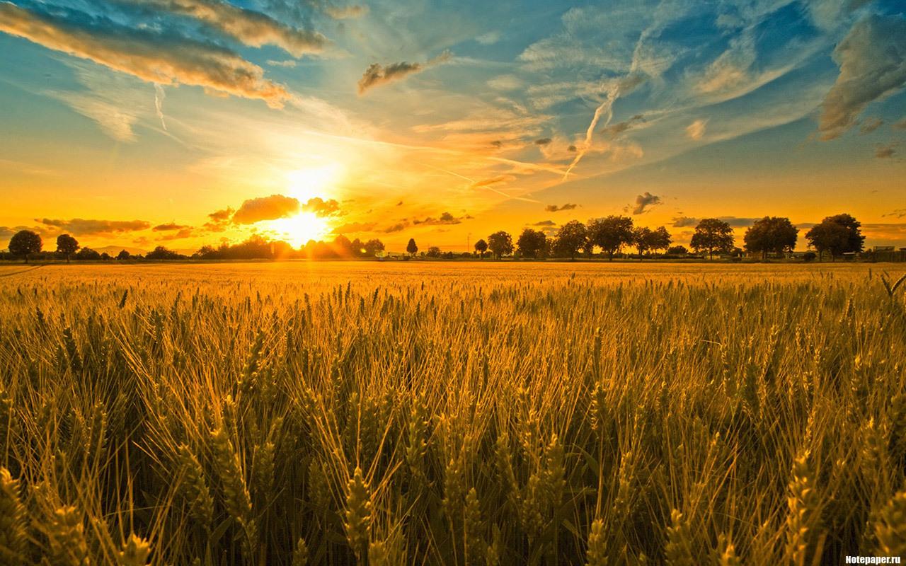 11550 скачать Желтые обои на телефон бесплатно, Пшеница, Пейзаж, Закат, Поля, Небо, Солнце Желтые картинки и заставки на мобильный