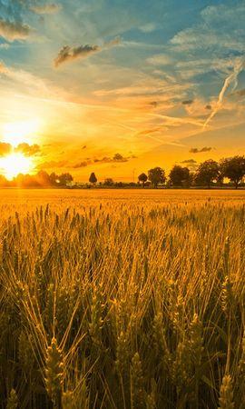 11550 скачать обои Пейзаж, Закат, Поля, Небо, Солнце, Пшеница - заставки и картинки бесплатно