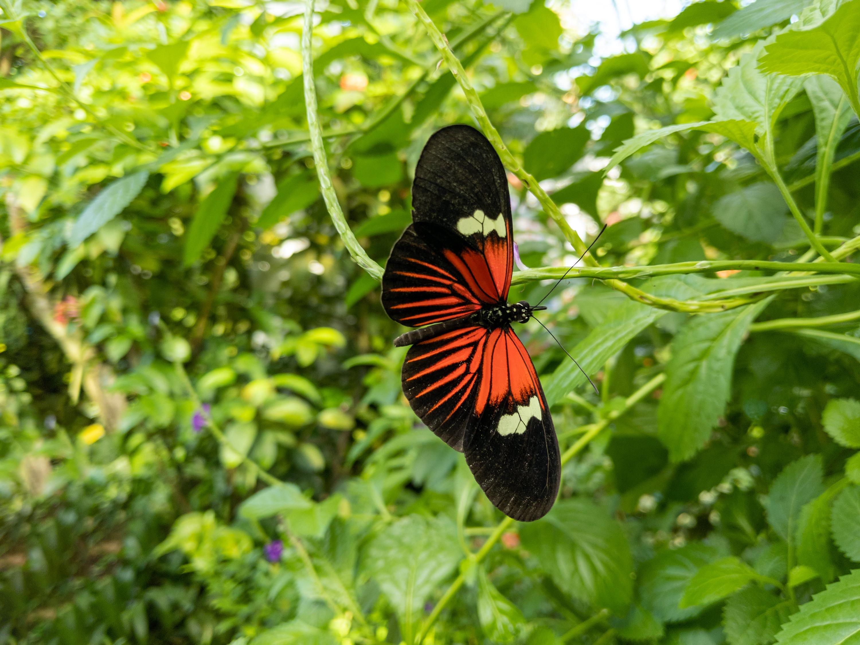 88090 скачать обои Животные, Тропическая Бабочка, Бабочка, Крылья, Узор, Растения - заставки и картинки бесплатно