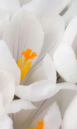 10459 скачать обои Растения, Цветы - заставки и картинки бесплатно