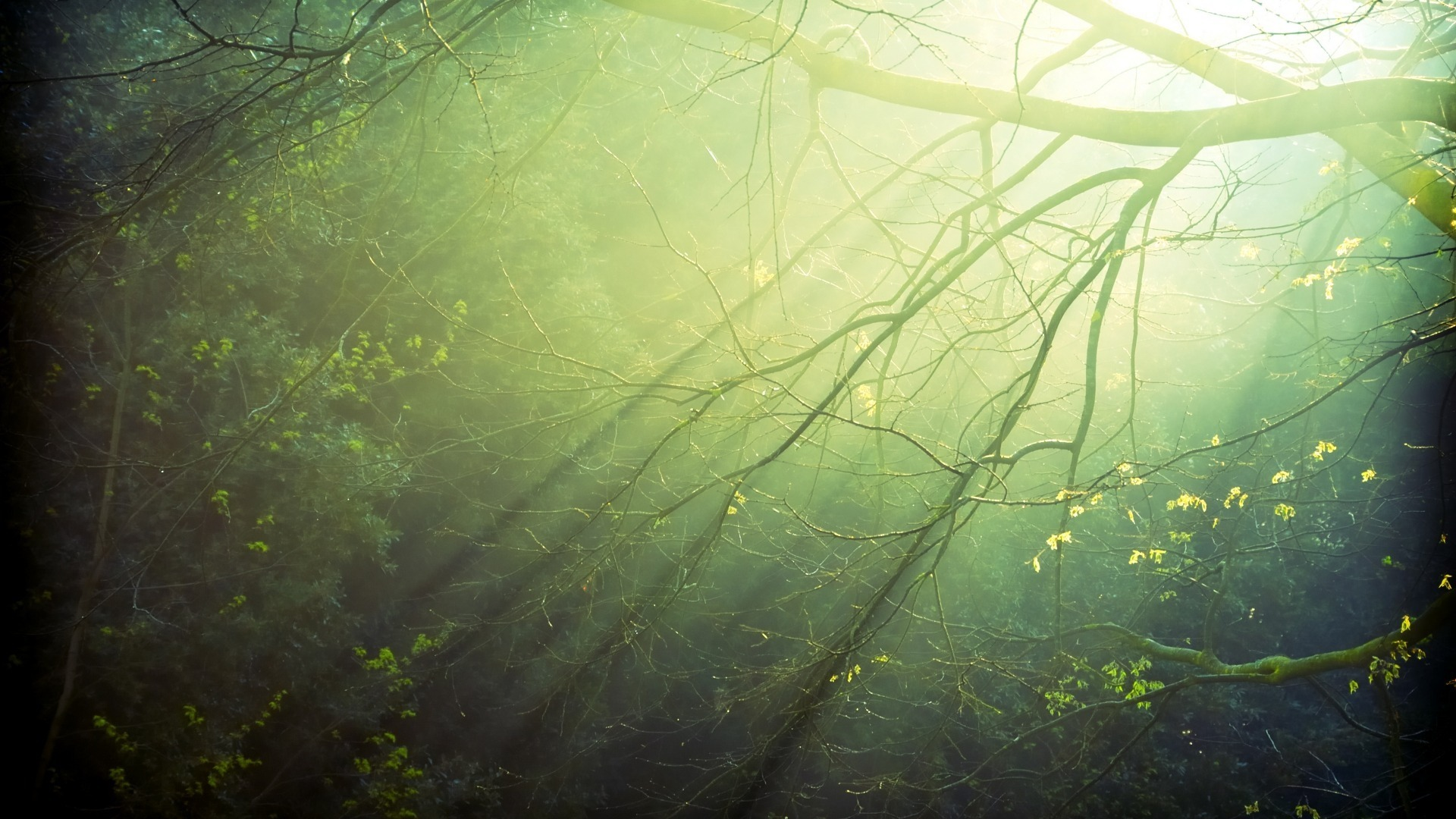 11699 скачать обои Пейзаж, Деревья - заставки и картинки бесплатно