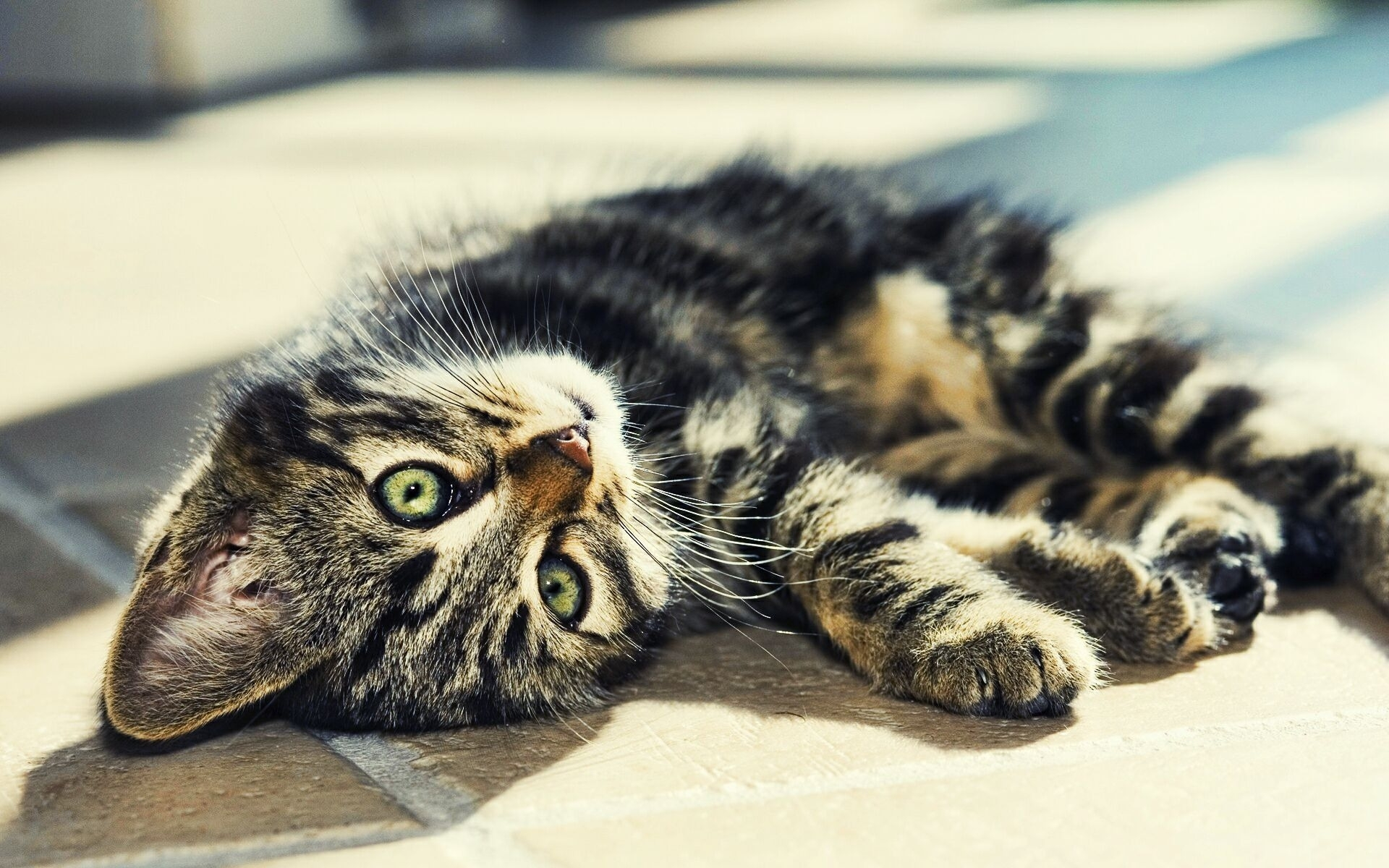 50126 download wallpaper Animals, Cats screensavers and pictures for free