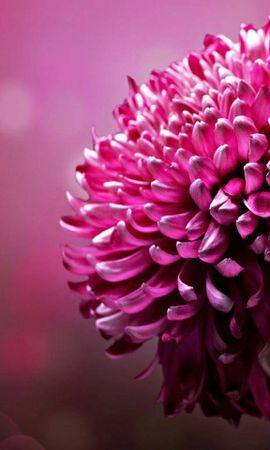 24675 скачать обои Растения, Цветы - заставки и картинки бесплатно