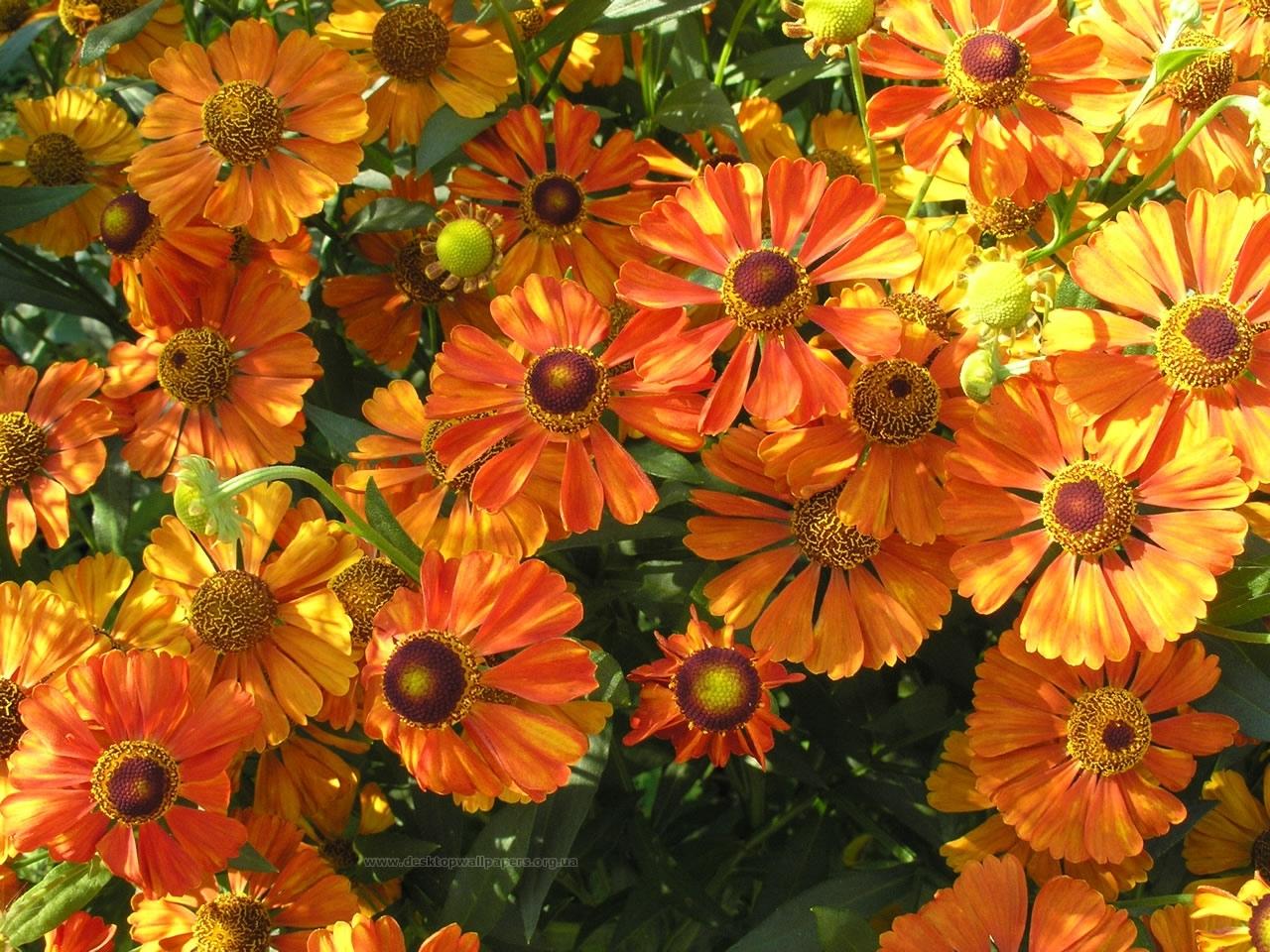 3917 скачать обои Растения, Цветы, Фон - заставки и картинки бесплатно