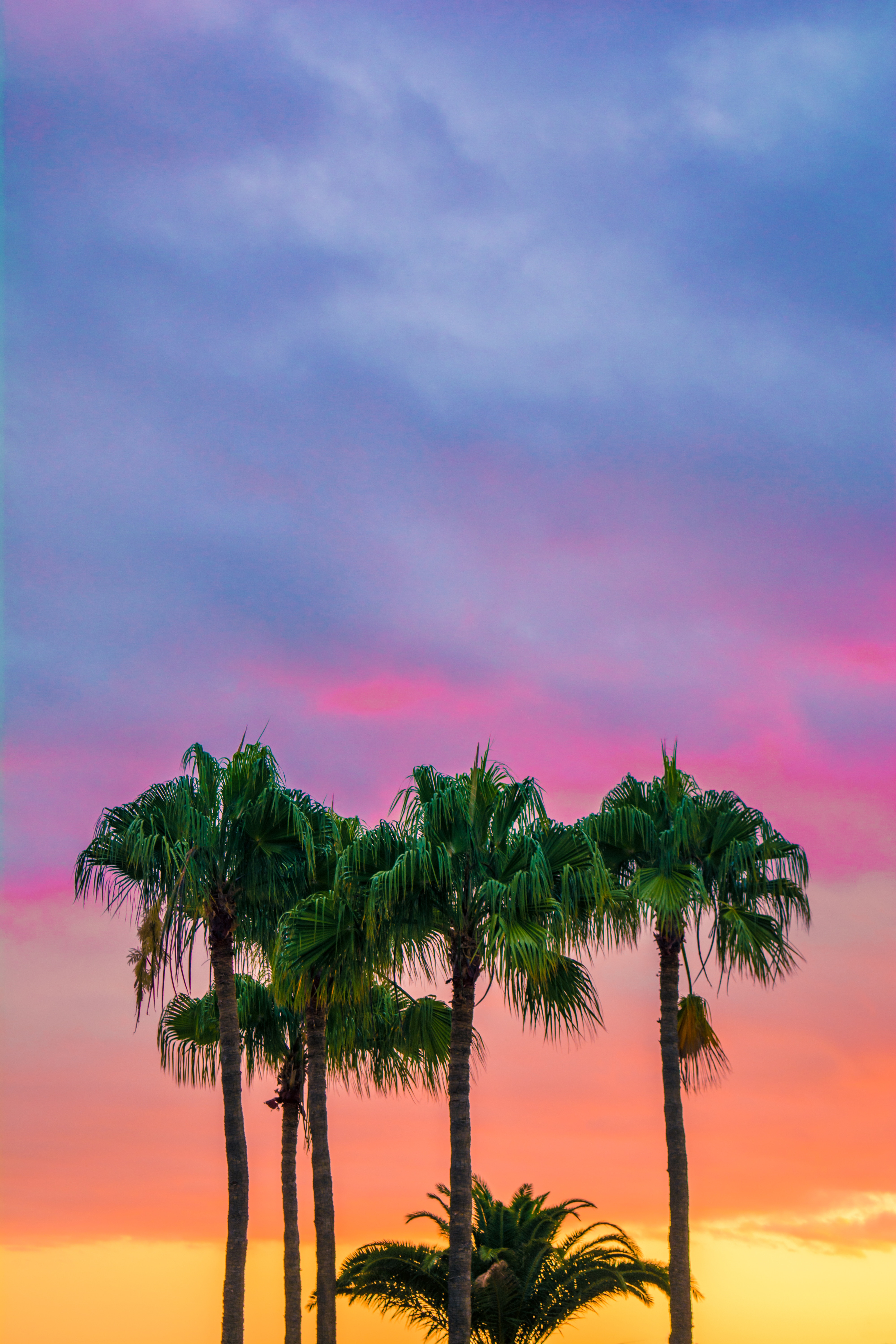 148714 download wallpaper Nature, Sky, Trees, Maspalomas, Spain, Palms screensavers and pictures for free