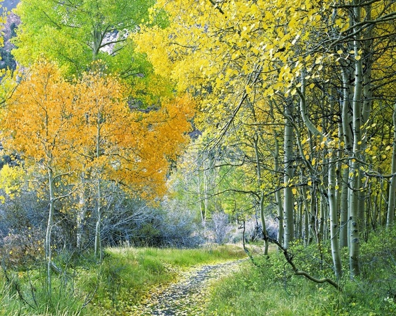 6925 скачать обои Пейзаж, Деревья, Осень - заставки и картинки бесплатно