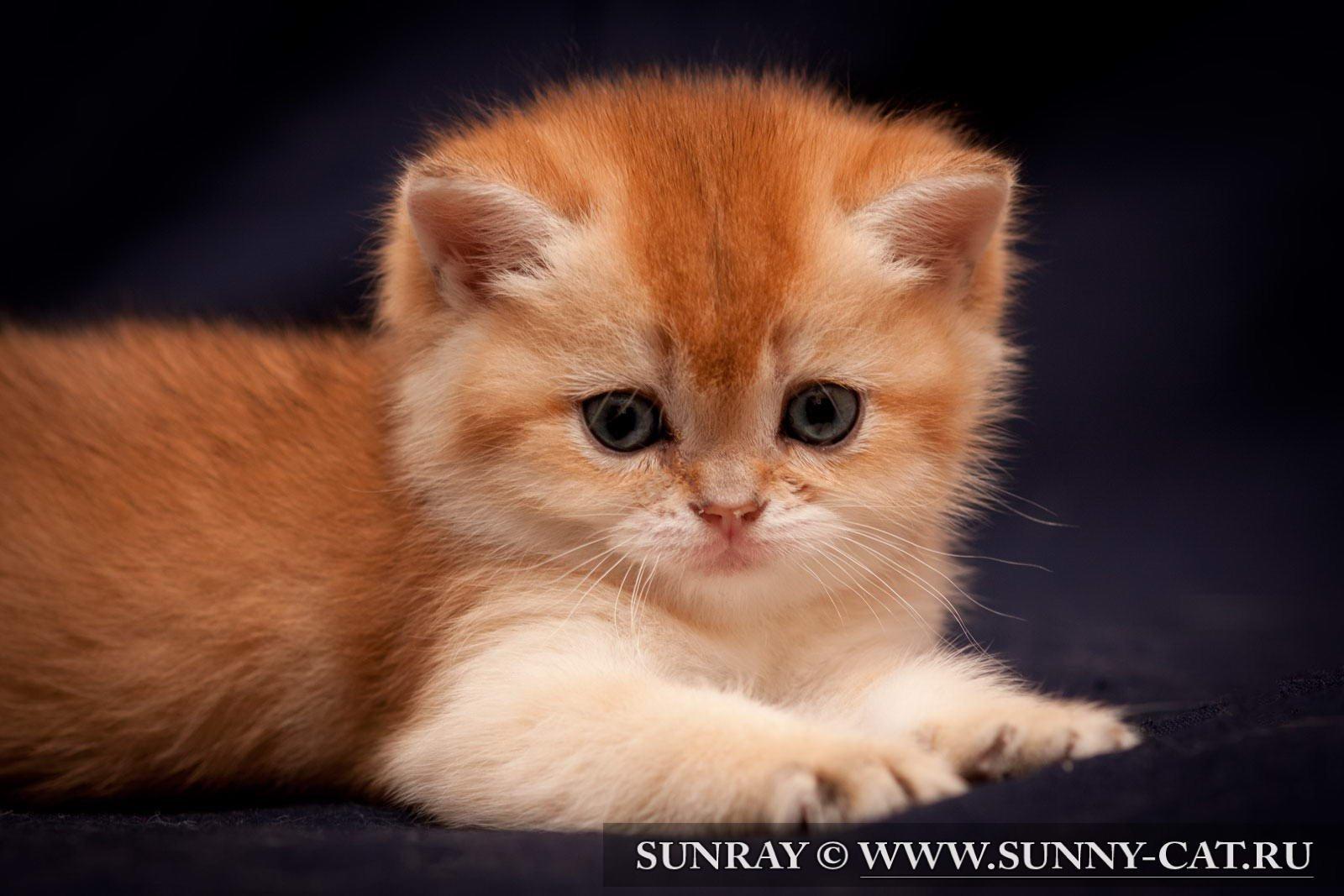 17569 скачать обои Кошки (Коты, Котики), Животные - заставки и картинки бесплатно