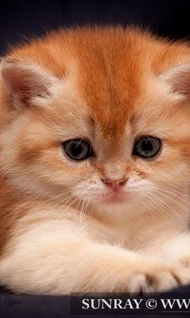 17569 скачать обои Животные, Кошки (Коты, Котики) - заставки и картинки бесплатно