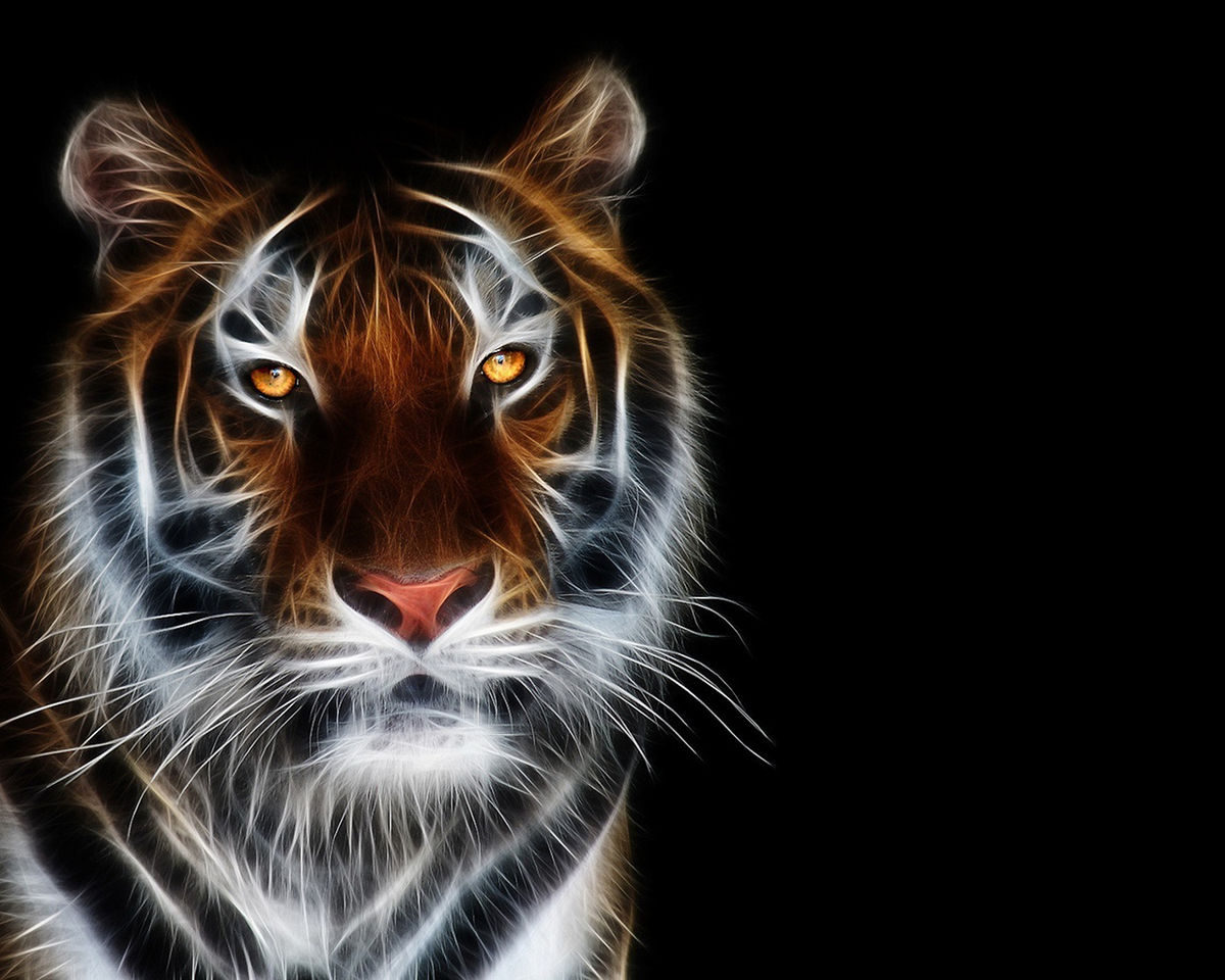 40758 descargar fondo de pantalla Animales, Tigres: protectores de pantalla e imágenes gratis