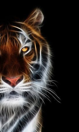 40758 download wallpaper Animals, Tigers screensavers and pictures for free