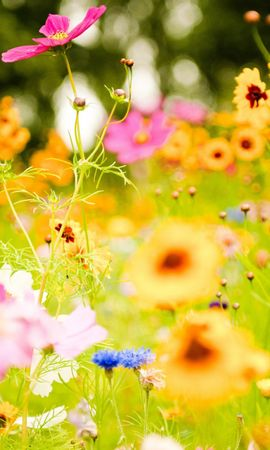 17578 download wallpaper Plants, Flowers screensavers and pictures for free