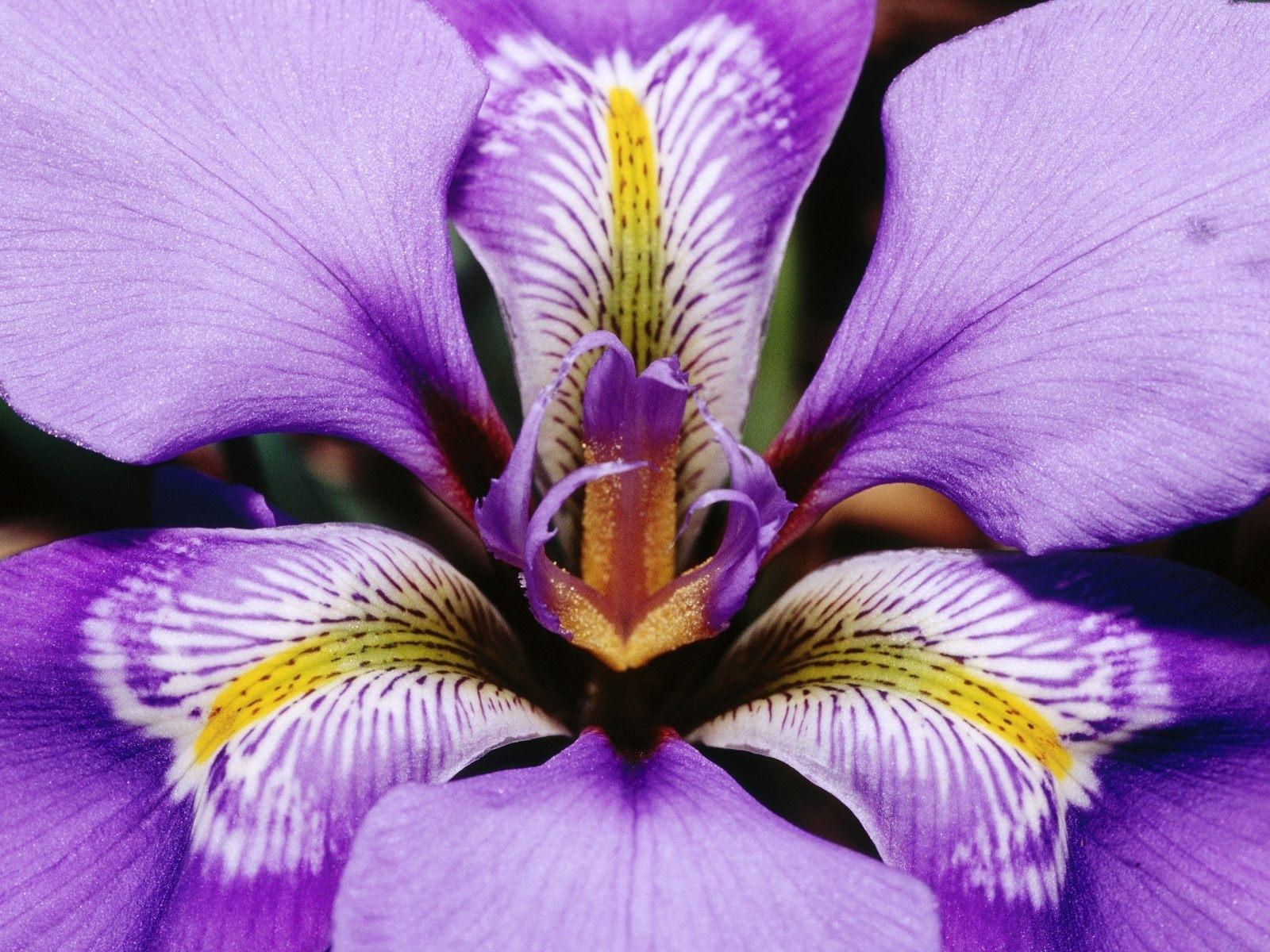 7571 скачать обои Растения, Цветы - заставки и картинки бесплатно