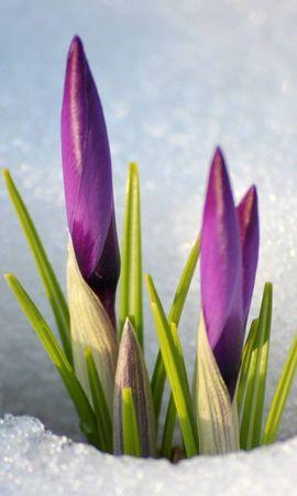 16200 descargar fondo de pantalla Plantas, Invierno, Flores, Nieve: protectores de pantalla e imágenes gratis