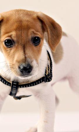 40009 baixar papel de parede Animais, Cães - protetores de tela e imagens gratuitamente