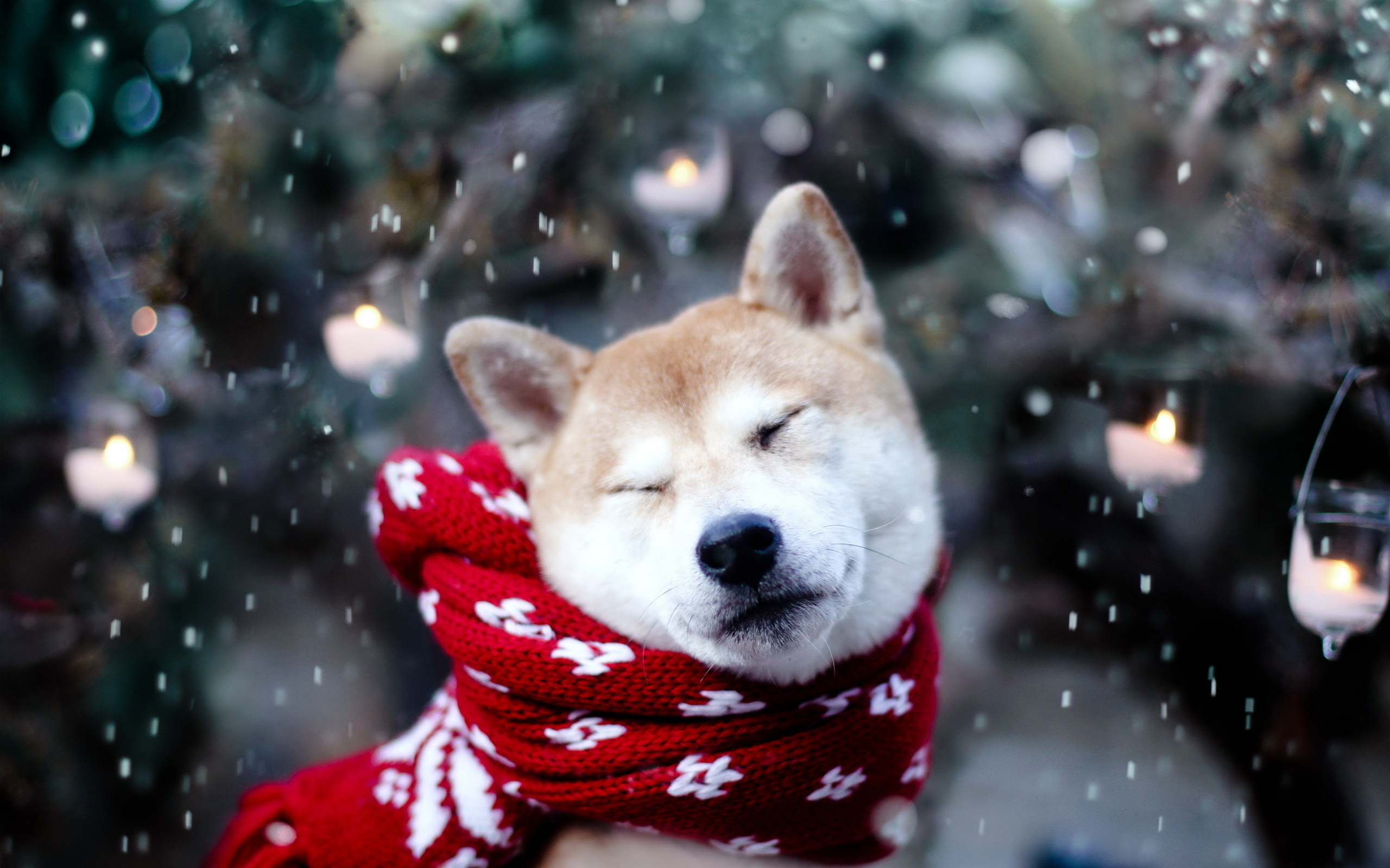 15241 download wallpaper Animals, Winter, Dogs screensavers and pictures for free