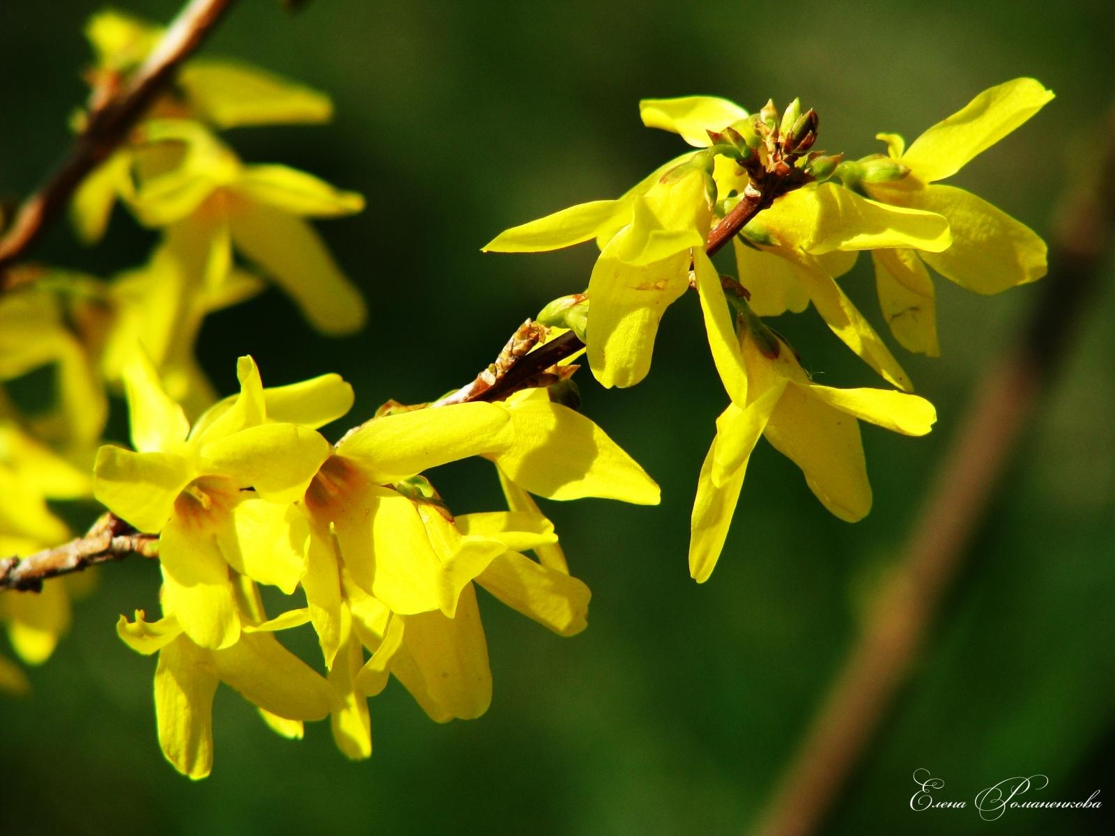 4792 скачать обои Растения, Цветы - заставки и картинки бесплатно