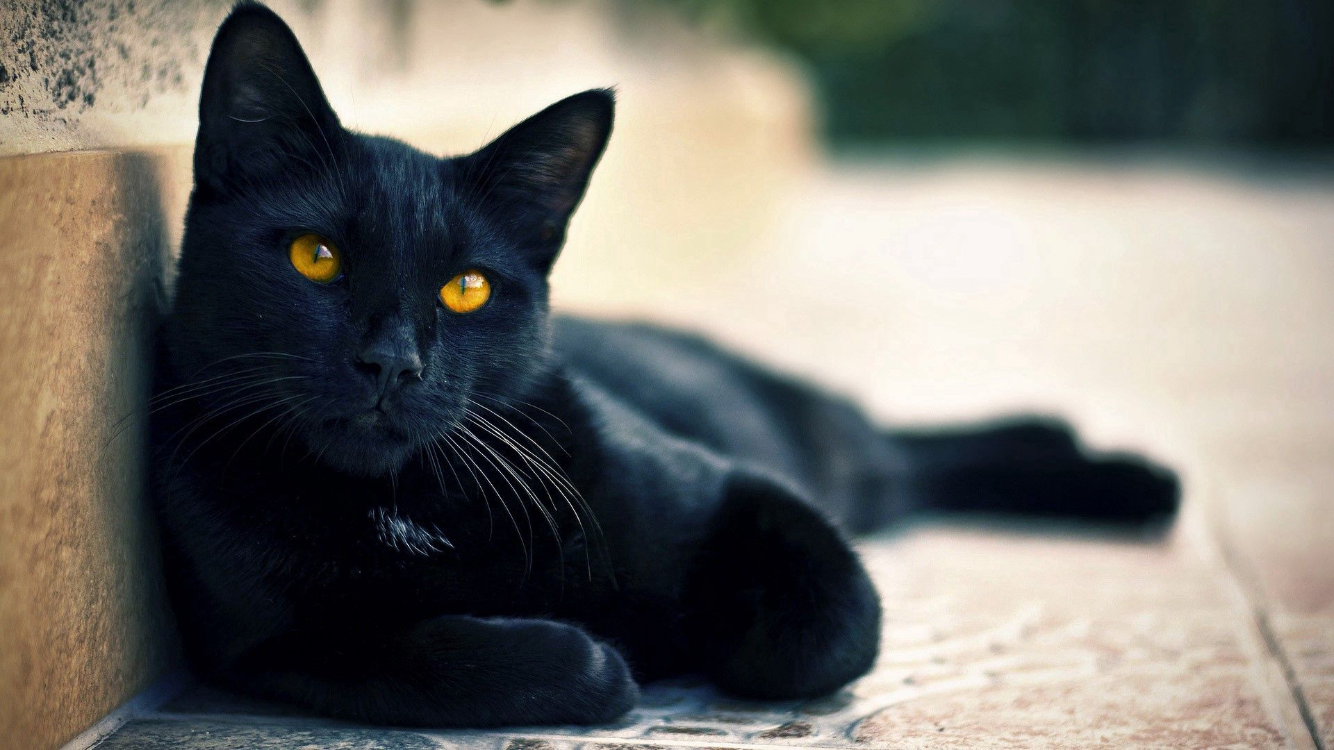 121637 download wallpaper Animals, Black Cat, To Lie Down, Lie, Relaxation, Rest screensavers and pictures for free