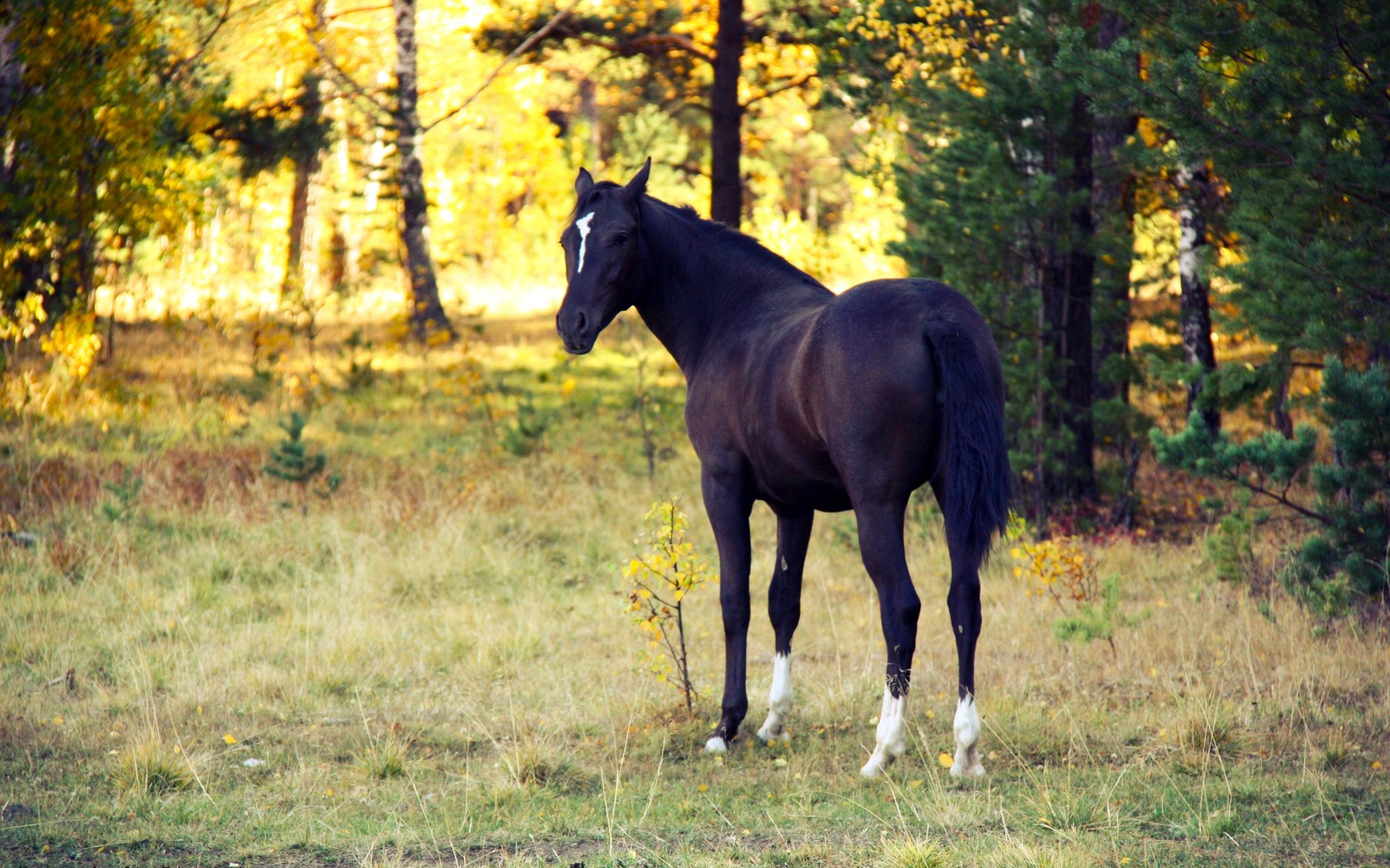 48559 скачать обои Животные, Лошади - заставки и картинки бесплатно