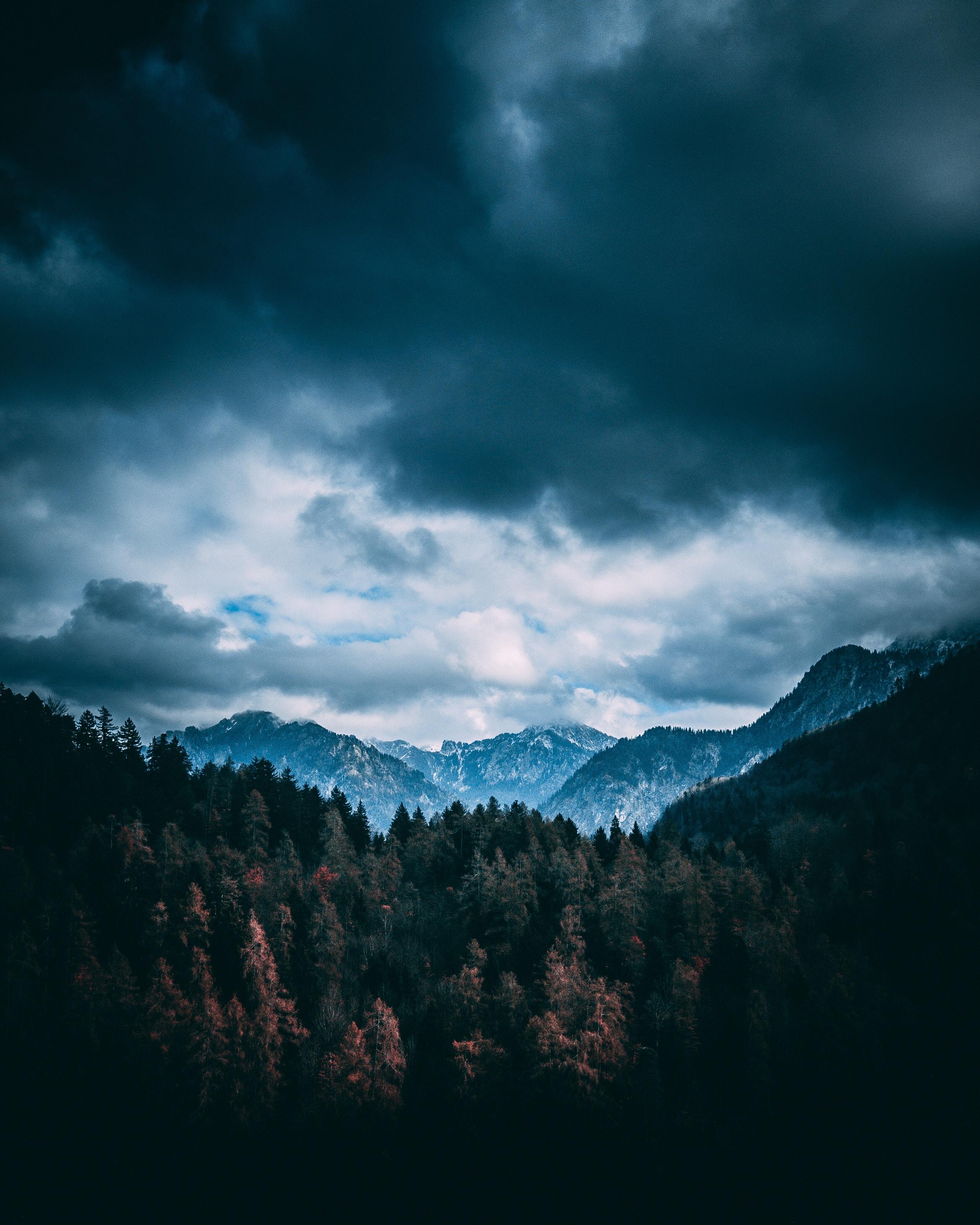 123625 скачать обои Горы, Облака, Природа, Деревья, Лес - заставки и картинки бесплатно