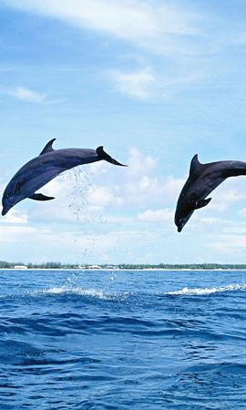 7306 download wallpaper Animals, Nature, Dolfins screensavers and pictures for free