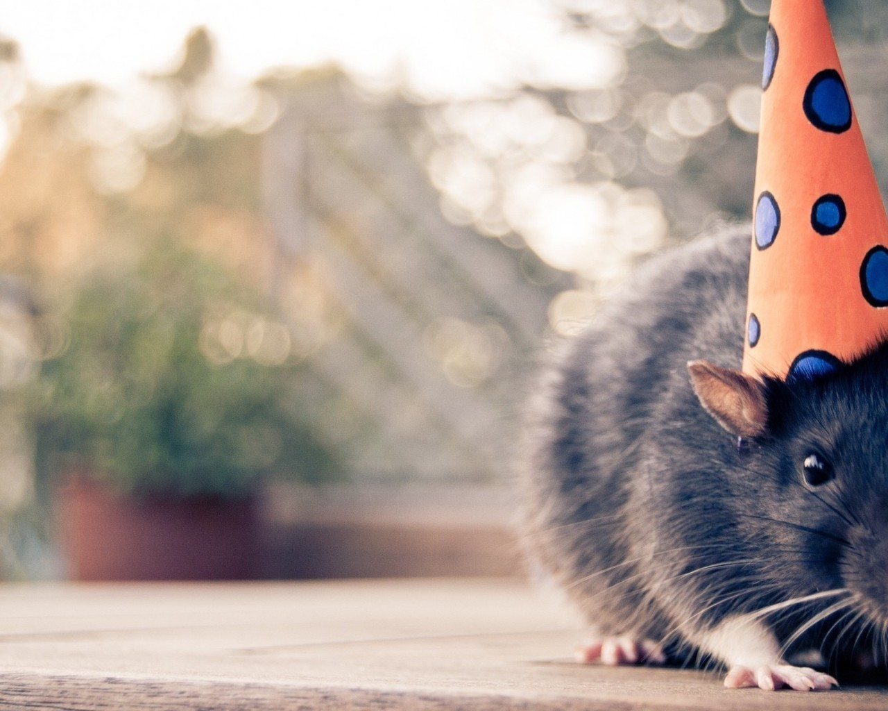 14352 Screensavers and Wallpapers Rodents for phone. Download Holidays, Rodents, Mice pictures for free