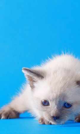 3970 download wallpaper Animals, Cats screensavers and pictures for free