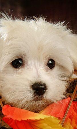 46596 baixar papel de parede Animais, Cães - protetores de tela e imagens gratuitamente