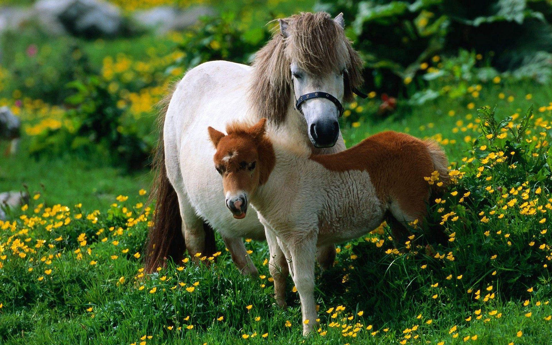 82242 Заставки и Обои Лошади на телефон. Скачать Лошади, Животные, Цветы, Трава, Прогулка, Семья, Жеребец картинки бесплатно