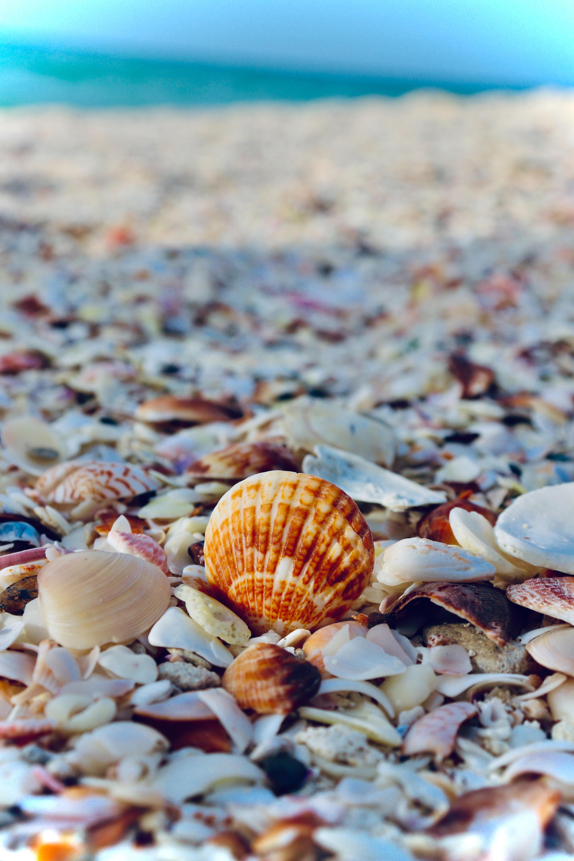 106116 скачать обои Ракушки, Природа, Море, Пляж, Отдых - заставки и картинки бесплатно