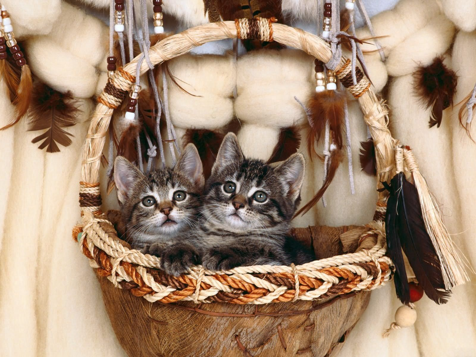 127337 Screensavers and Wallpapers Kittens for phone. Download Animals, Couple, Pair, Basket, Kittens pictures for free