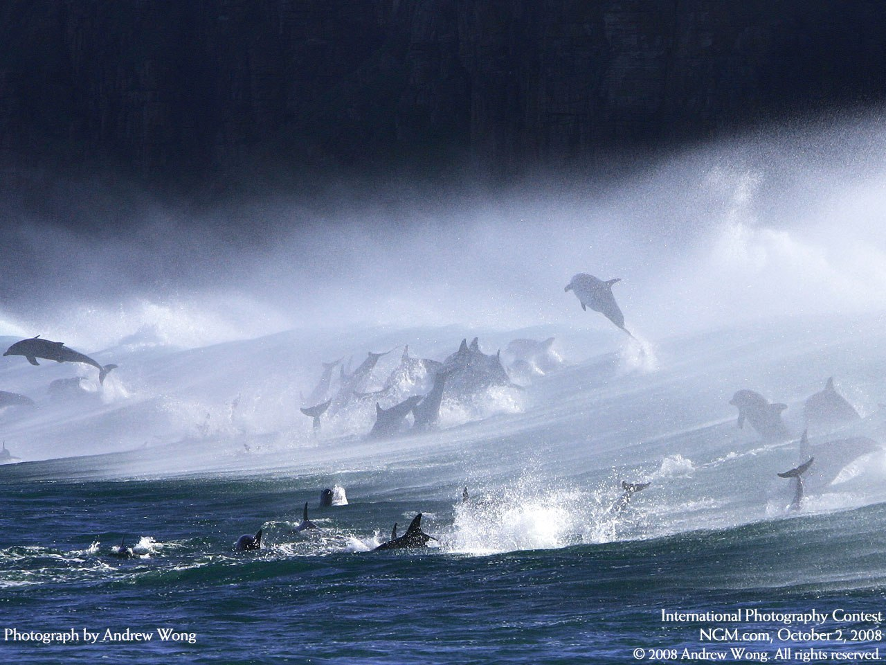 14957 download wallpaper Animals, Water, Dolfins, Sea screensavers and pictures for free