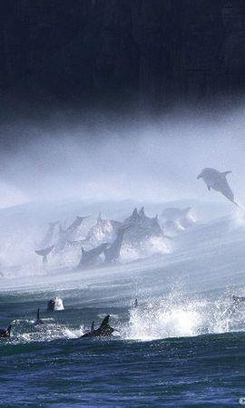 14957 baixar papel de parede Animais, Água, Golfinhos, Mar - protetores de tela e imagens gratuitamente
