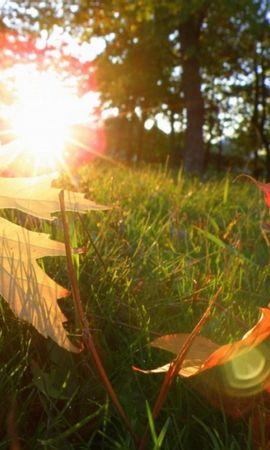 5099 скачать обои Растения, Листья, Солнце - заставки и картинки бесплатно