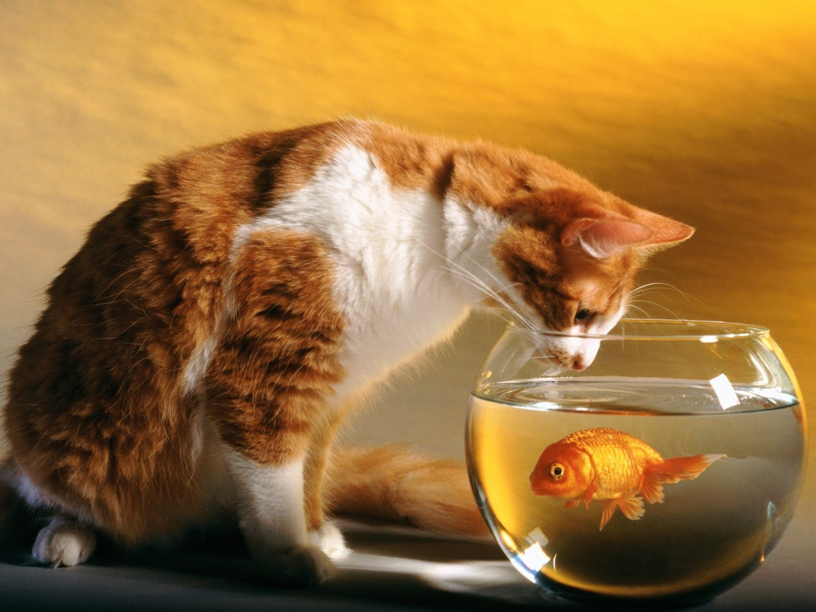 Download mobile wallpaper Animals, Cats, Aquariums, Fishes for free.