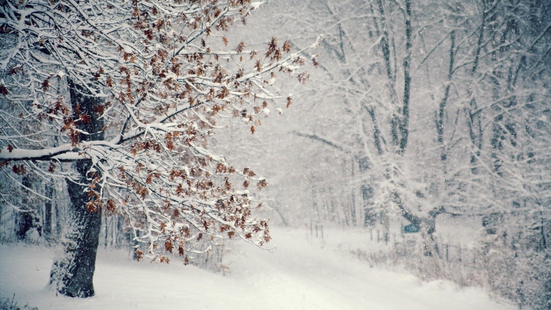 15952 descargar fondo de pantalla Paisaje, Invierno, Árboles, Nieve: protectores de pantalla e imágenes gratis