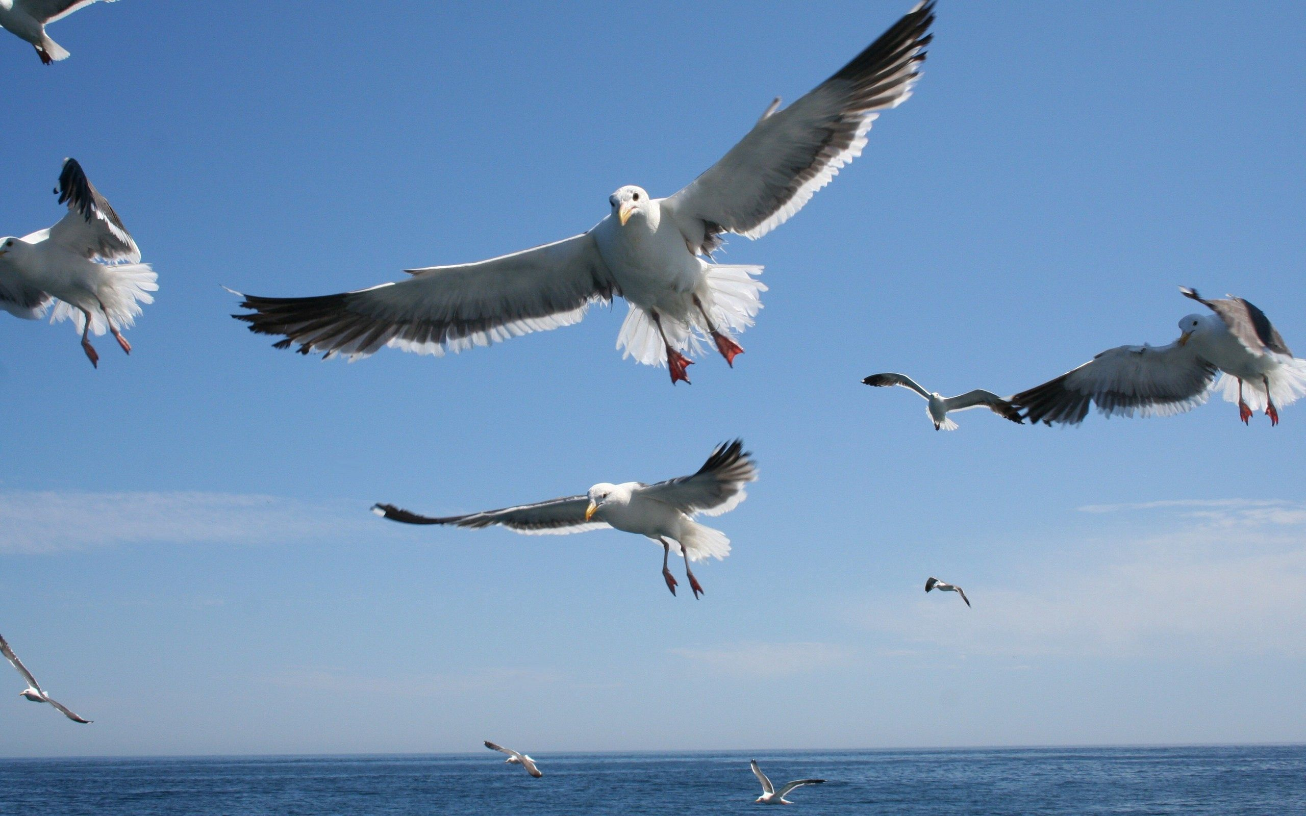 144483 download wallpaper Animals, Flight, Sea, Sky, Seagulls screensavers and pictures for free
