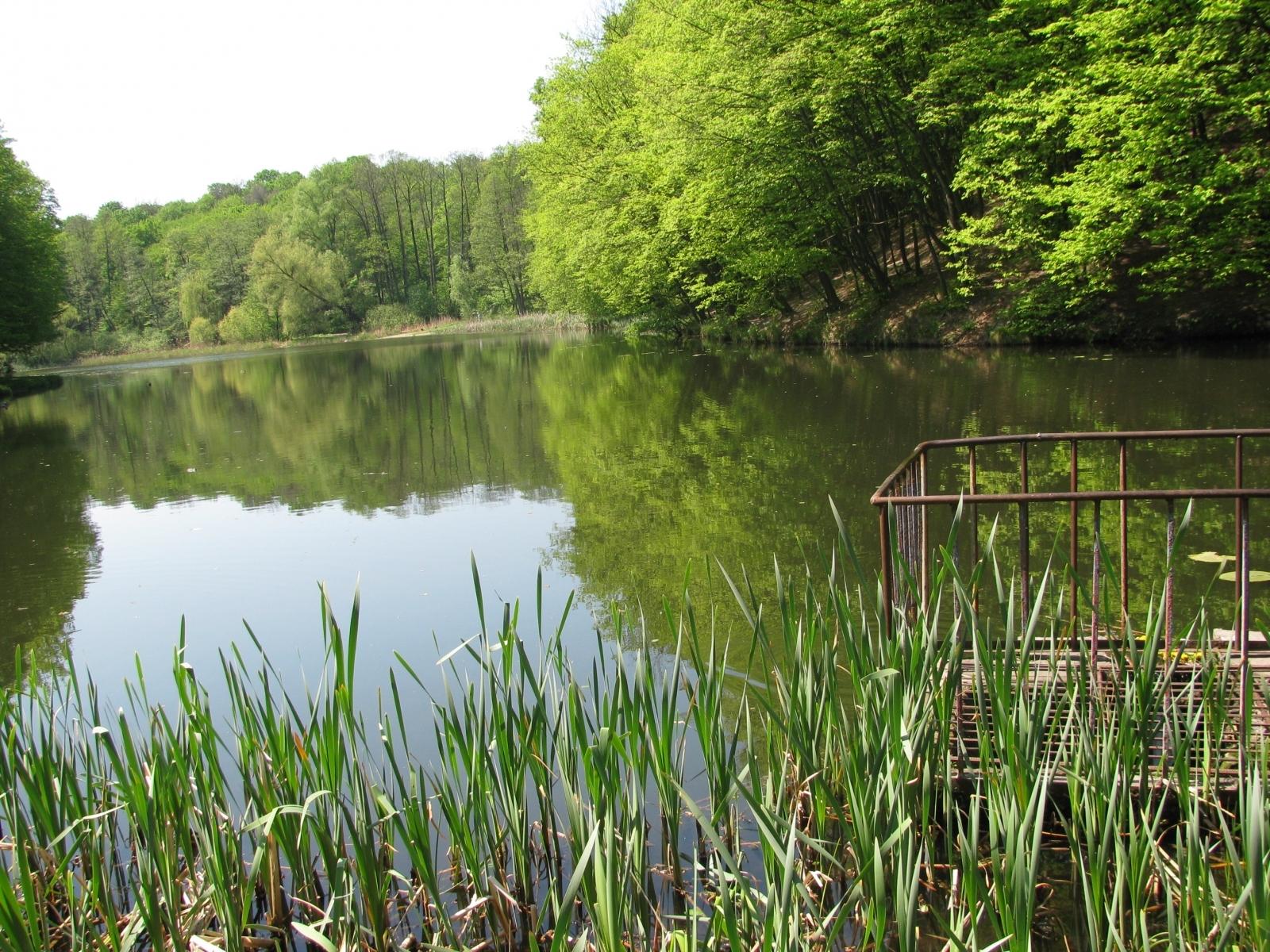 2540 скачать обои Пейзаж, Вода, Река, Деревья - заставки и картинки бесплатно