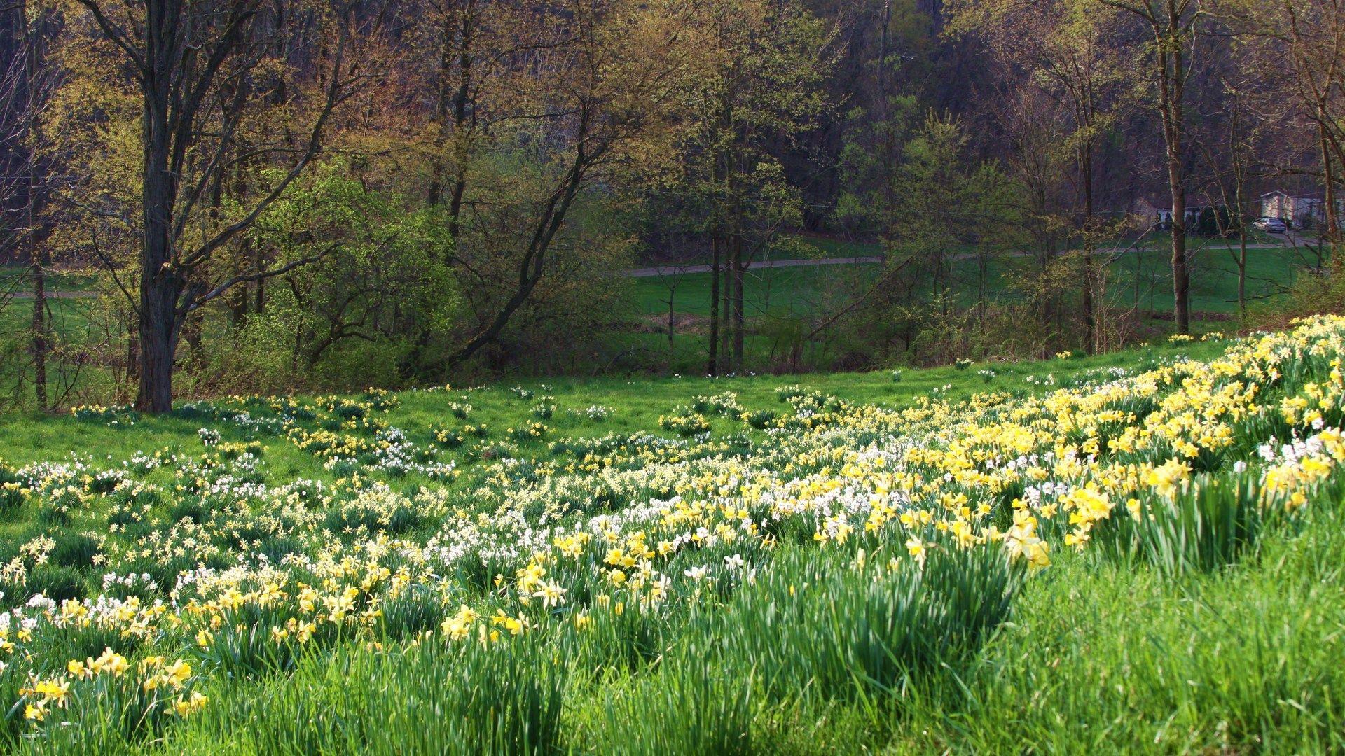 89893 Salvapantallas y fondos de pantalla Flores en tu teléfono. Descarga imágenes de Primavera, Hierba, Naturaleza, Flores gratis