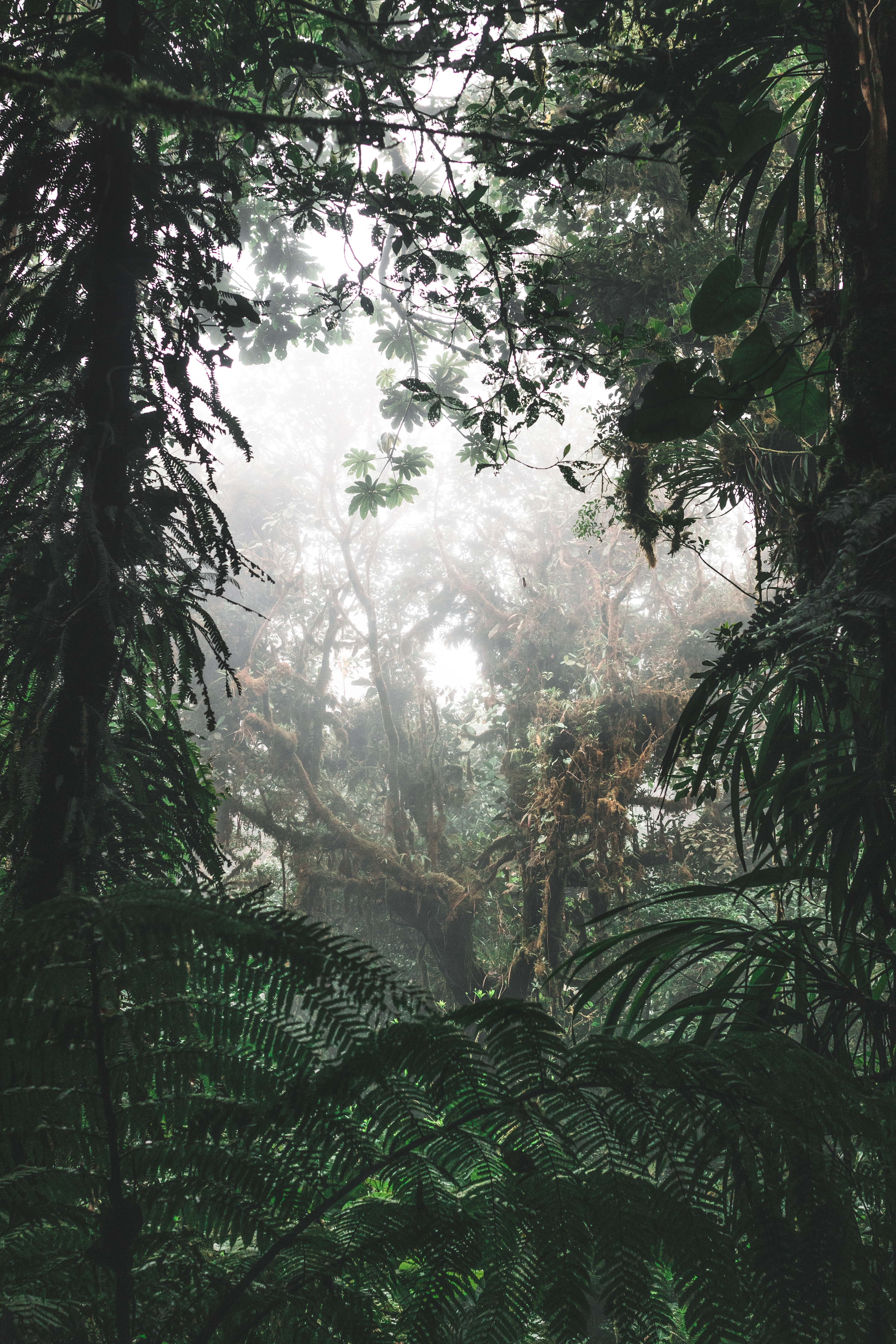 79552 download wallpaper Nature, Jungle, Forest, Fog, Trees, Tropics, Bush screensavers and pictures for free